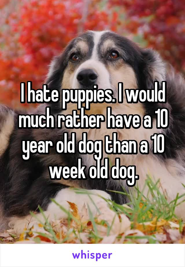 I hate puppies. I would much rather have a 10 year old dog than a 10 week old dog.