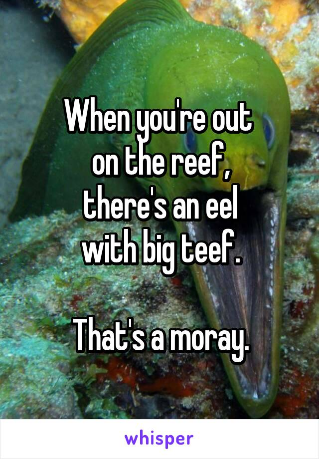 When you're out  on the reef, there's an eel with big teef.    That's a moray.
