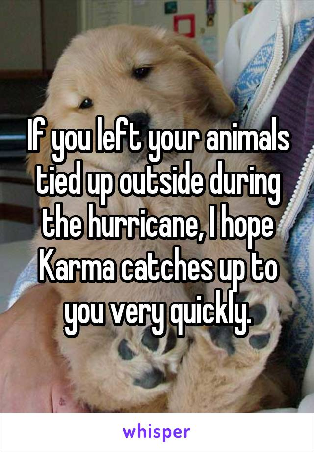 If you left your animals tied up outside during the hurricane, I hope Karma catches up to you very quickly.