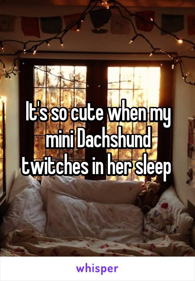 It's so cute when my mini Dachshund twitches in her sleep