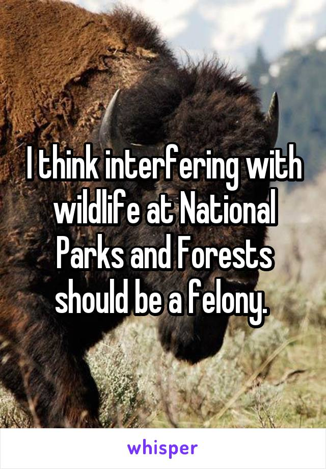 I think interfering with wildlife at National Parks and Forests should be a felony.