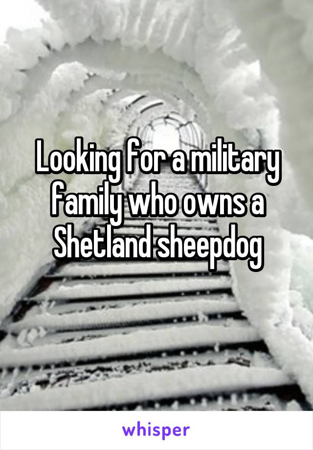 Looking for a military family who owns a Shetland sheepdog