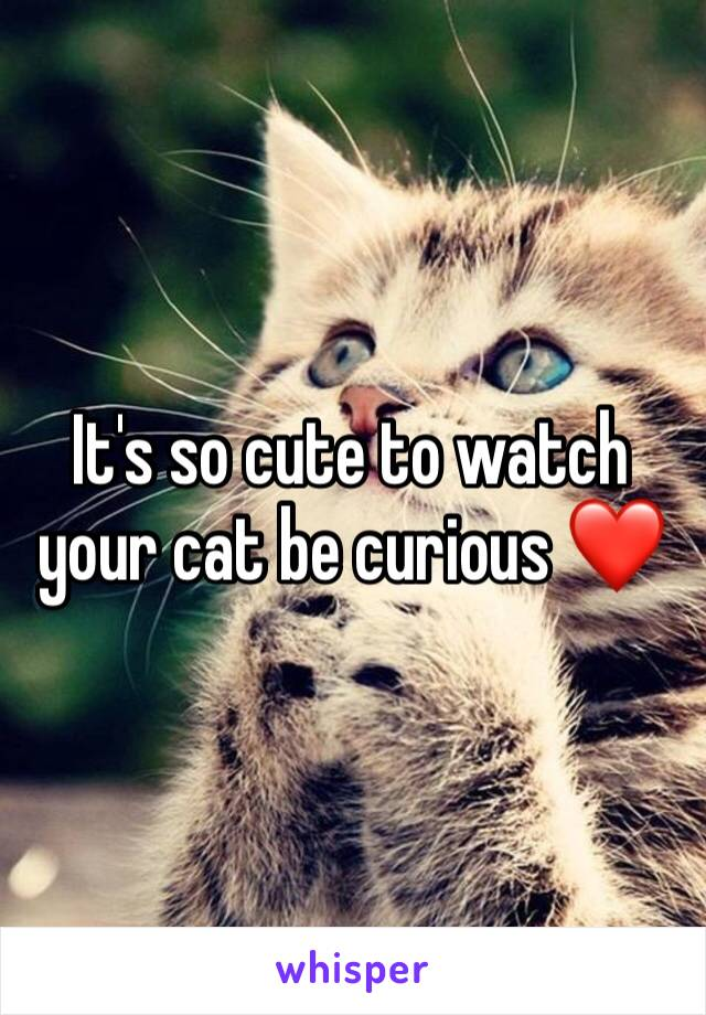 It's so cute to watch your cat be curious ❤️