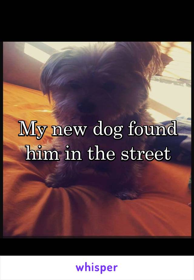 My new dog found him in the street