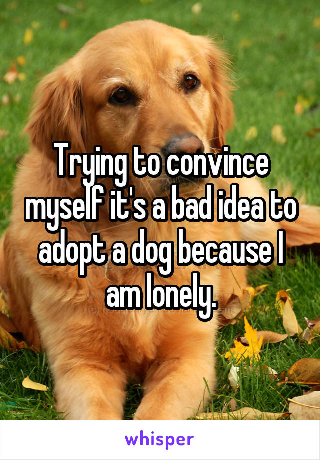 Trying to convince myself it's a bad idea to adopt a dog because I am lonely.