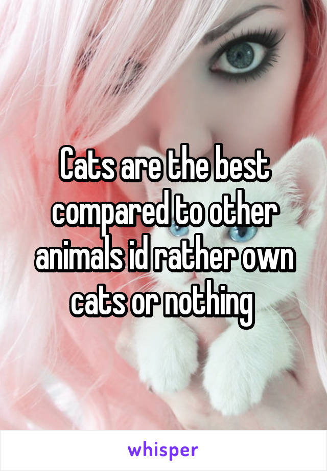 Cats are the best compared to other animals id rather own cats or nothing