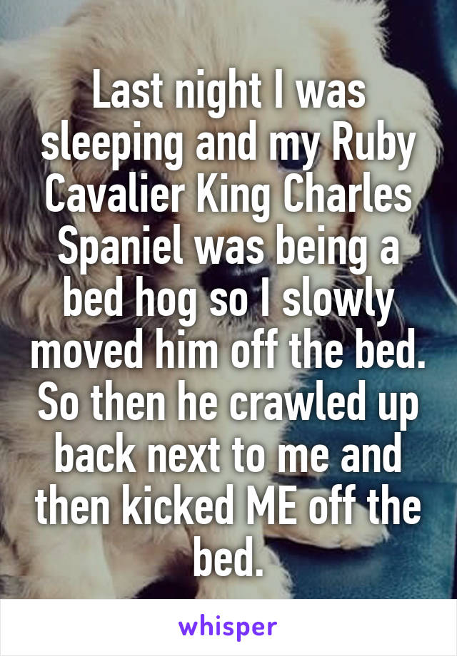Last night I was sleeping and my Ruby Cavalier King Charles Spaniel was being a bed hog so I slowly moved him off the bed. So then he crawled up back next to me and then kicked ME off the bed.