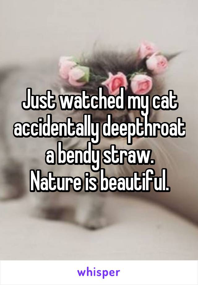 Just watched my cat accidentally deepthroat a bendy straw. Nature is beautiful.