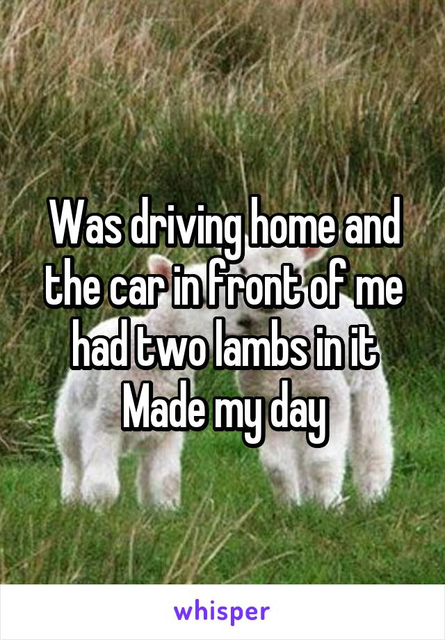 Was driving home and the car in front of me had two lambs in it Made my day