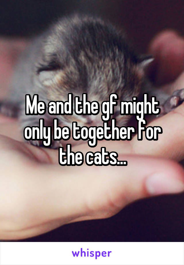 Me and the gf might only be together for the cats...