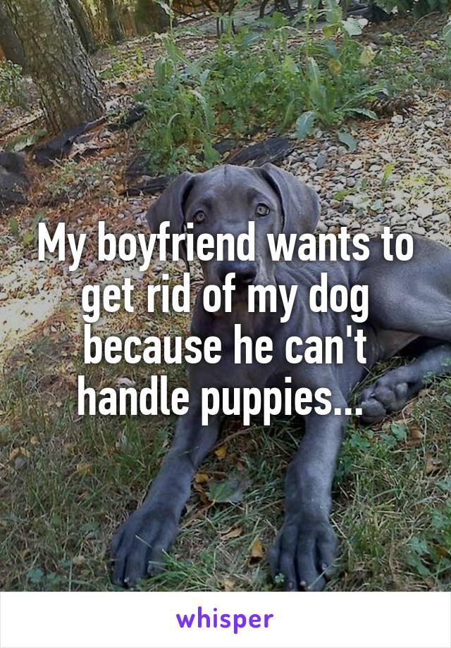 My boyfriend wants to get rid of my dog because he can't handle puppies...