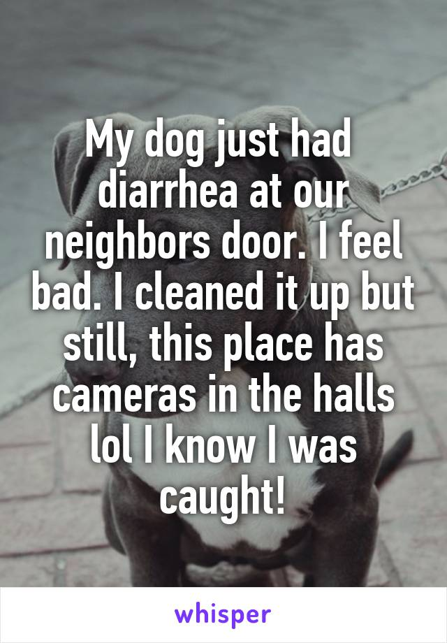 My dog just had  diarrhea at our neighbors door. I feel bad. I cleaned it up but still, this place has cameras in the halls lol I know I was caught!