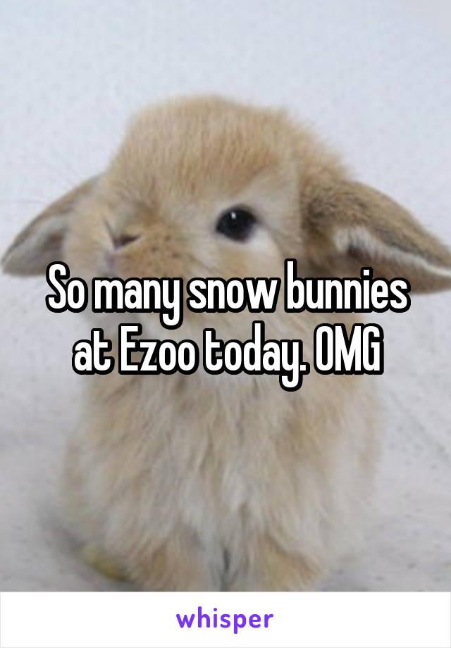 So many snow bunnies at Ezoo today. OMG