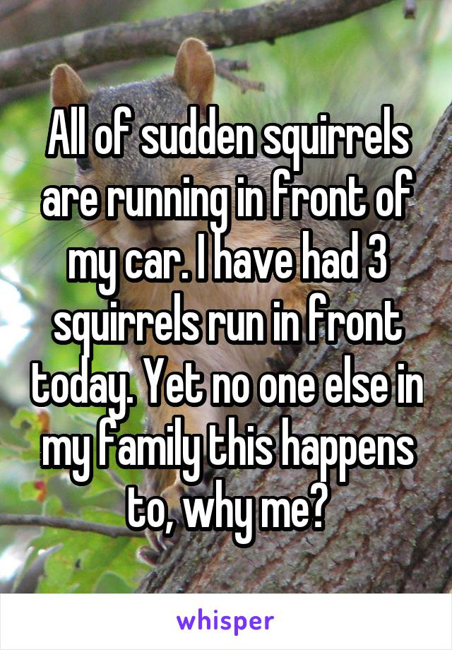 All of sudden squirrels are running in front of my car. I have had 3 squirrels run in front today. Yet no one else in my family this happens to, why me?