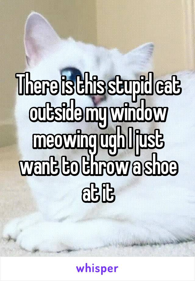There is this stupid cat outside my window meowing ugh I just want to throw a shoe at it