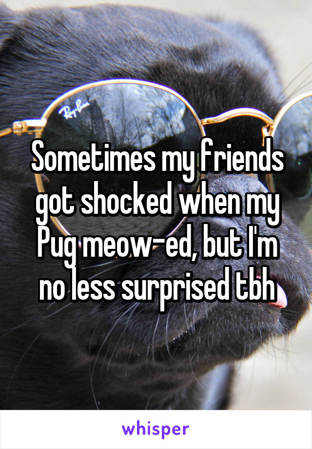 Sometimes my friends got shocked when my Pug meow-ed, but I'm no less surprised tbh
