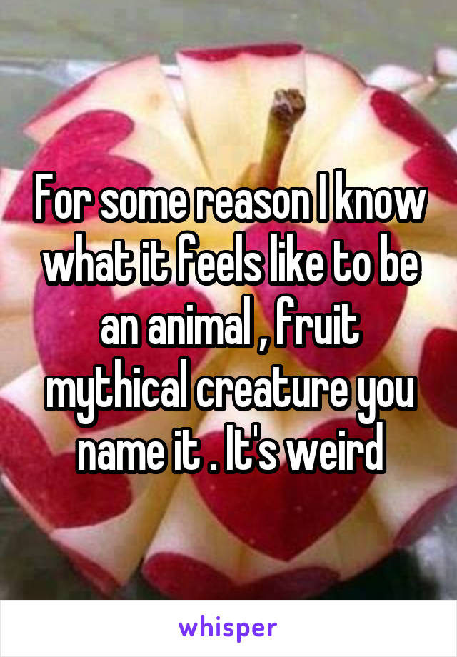 For some reason I know what it feels like to be an animal , fruit mythical creature you name it . It's weird