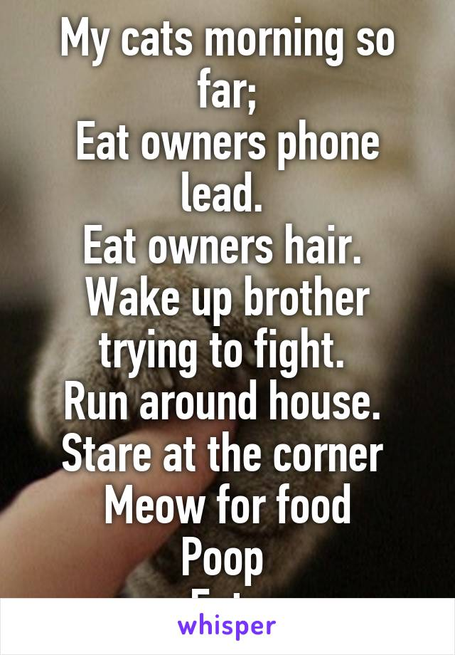 My cats morning so far; Eat owners phone lead.  Eat owners hair.  Wake up brother trying to fight.  Run around house.  Stare at the corner  Meow for food Poop  Eat.