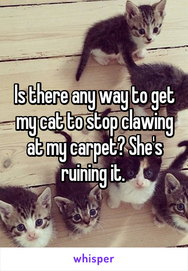 Is there any way to get my cat to stop clawing at my carpet? She's ruining it.
