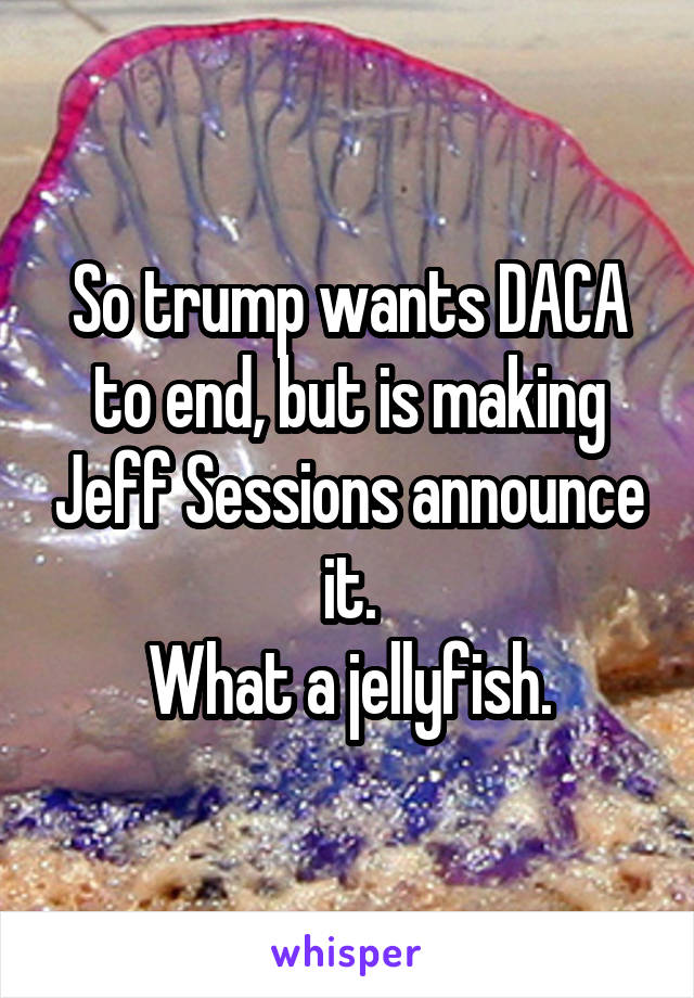 So trump wants DACA to end, but is making Jeff Sessions announce it. What a jellyfish.