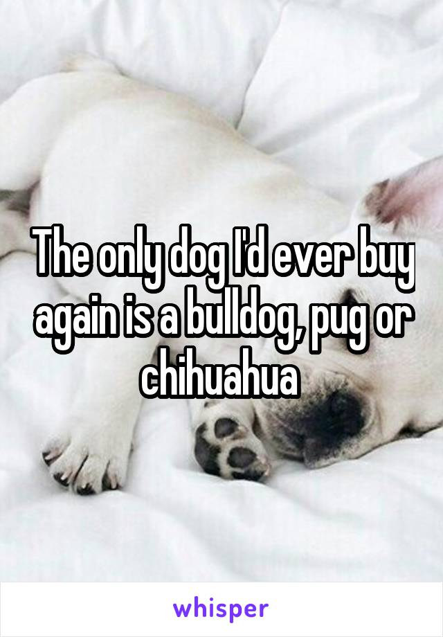 The only dog I'd ever buy again is a bulldog, pug or chihuahua