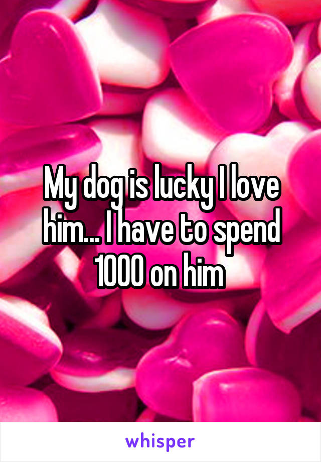 My dog is lucky I love him... I have to spend 1000 on him