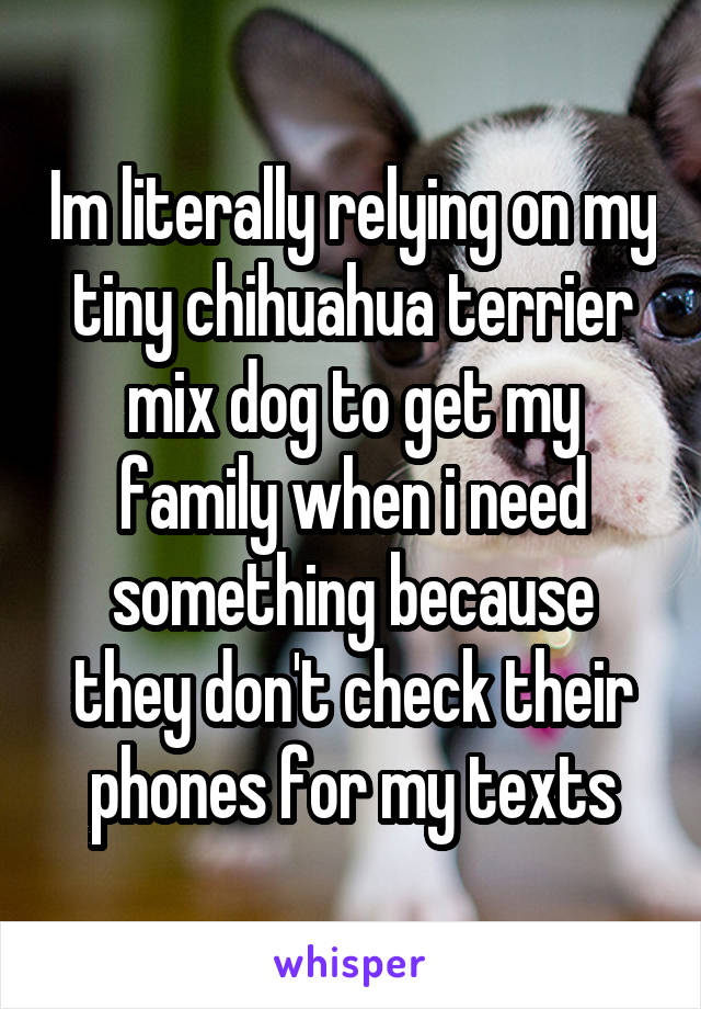 Im literally relying on my tiny chihuahua terrier mix dog to get my family when i need something because they don't check their phones for my texts