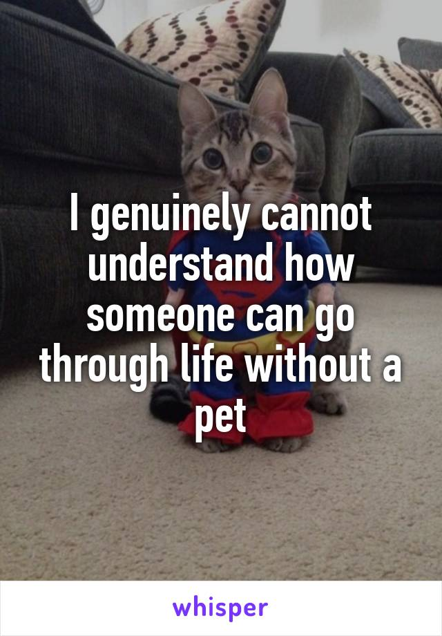 I genuinely cannot understand how someone can go through life without a pet