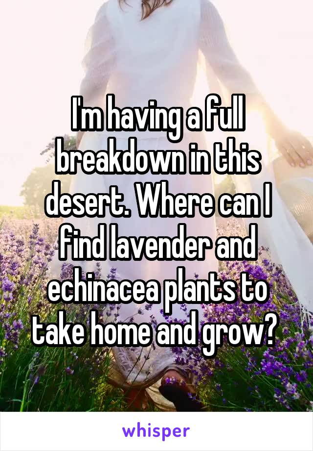 I'm having a full breakdown in this desert. Where can I find lavender and echinacea plants to take home and grow?