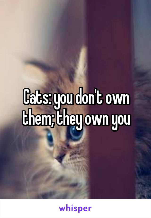 Cats: you don't own them; they own you