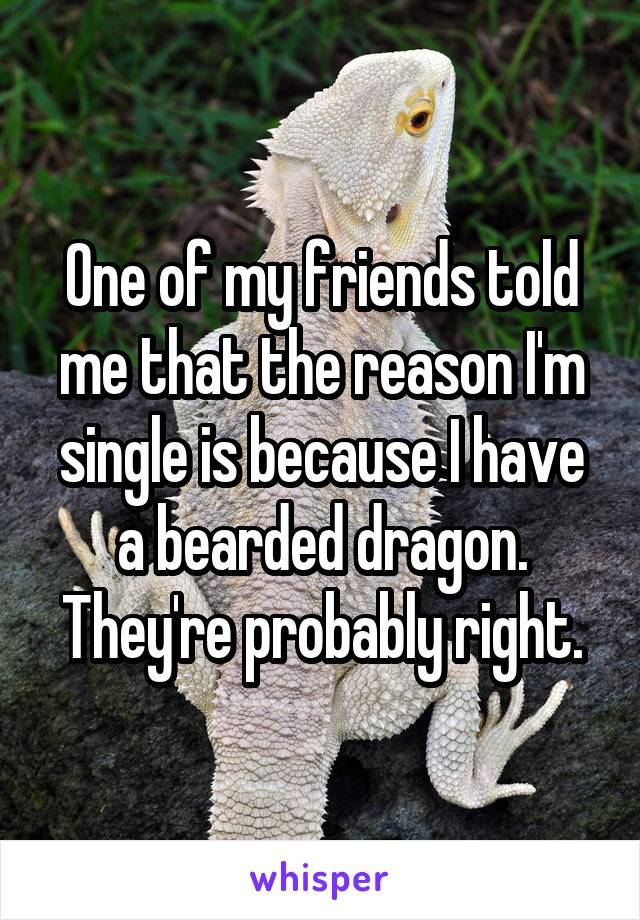 One of my friends told me that the reason I'm single is because I have a bearded dragon. They're probably right.