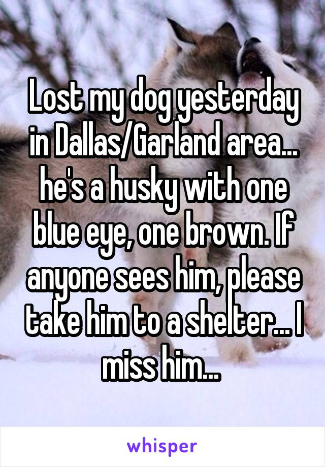 Lost my dog yesterday in Dallas/Garland area... he's a husky with one blue eye, one brown. If anyone sees him, please take him to a shelter... I miss him...