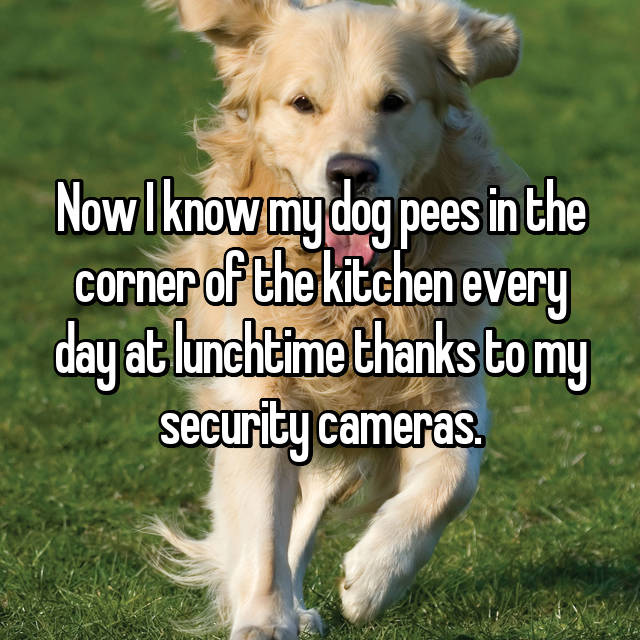 Now I know my dog pees in the corner of the kitchen every day at lunchtime thanks to my security cameras.