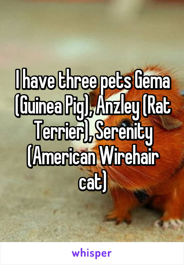 I have three pets Gema (Guinea Pig), Anzley (Rat Terrier), Serenity (American Wirehair cat)