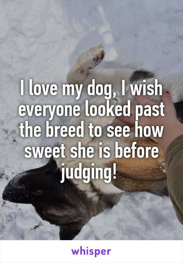 I love my dog, I wish everyone looked past the breed to see how sweet she is before judging!
