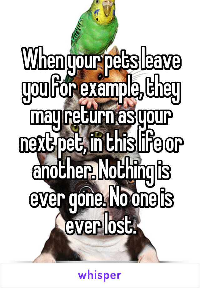 When your pets leave you for example, they may return as your next pet, in this life or another. Nothing is ever gone. No one is ever lost.