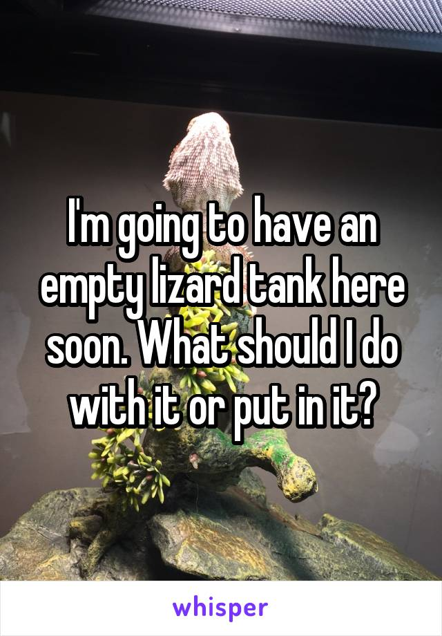 I'm going to have an empty lizard tank here soon. What should I do with it or put in it?
