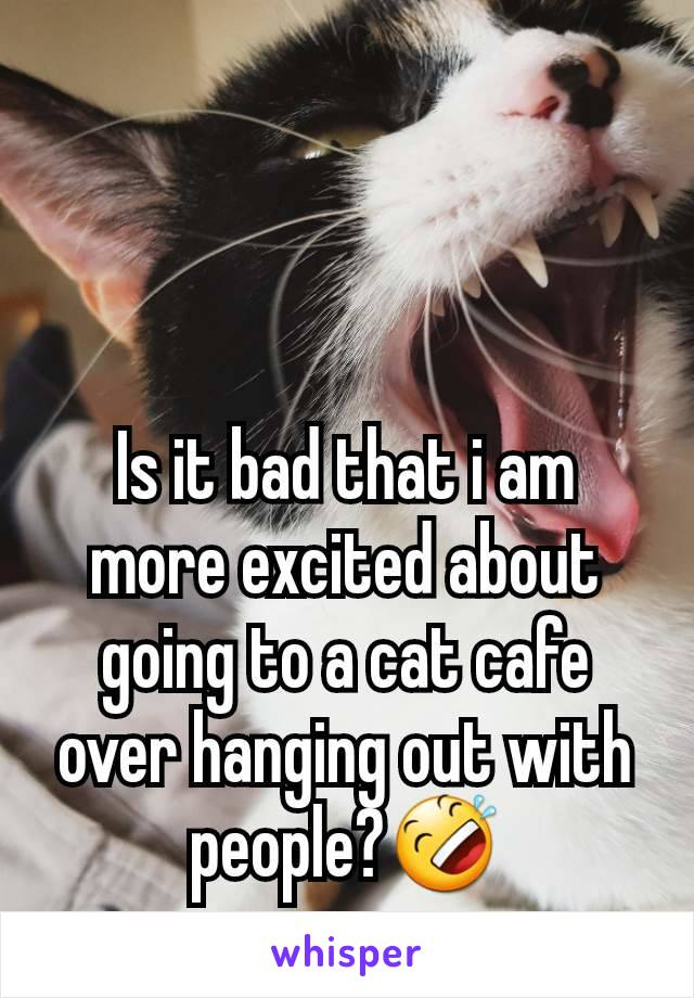 Is it bad that i am more excited about going to a cat cafe over hanging out with people?🤣