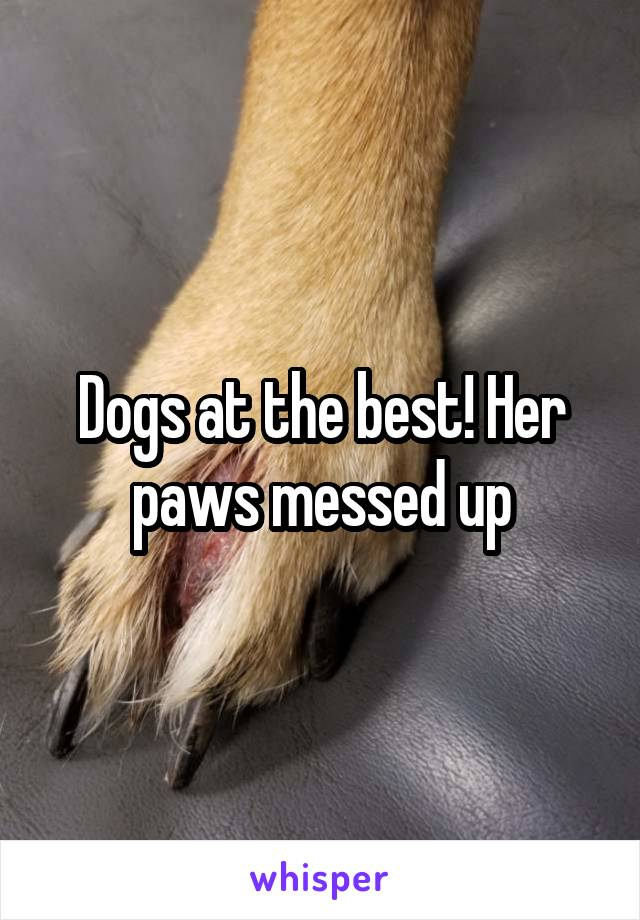 Dogs at the best! Her paws messed up