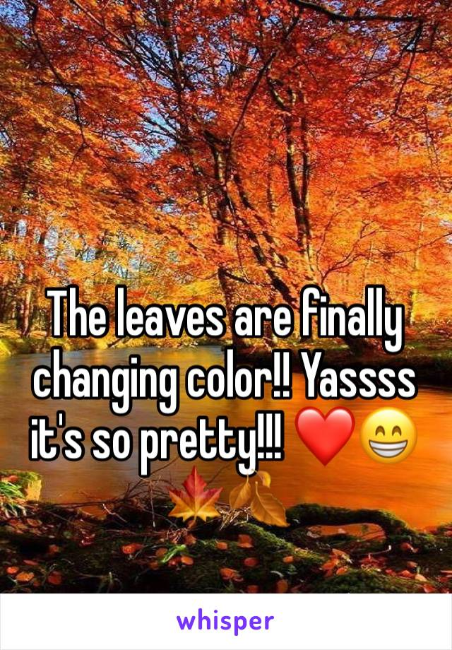 The leaves are finally changing color!! Yassss it's so pretty!!! ❤️😁🍁🍂