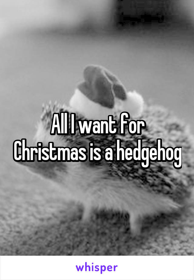 All I want for Christmas is a hedgehog