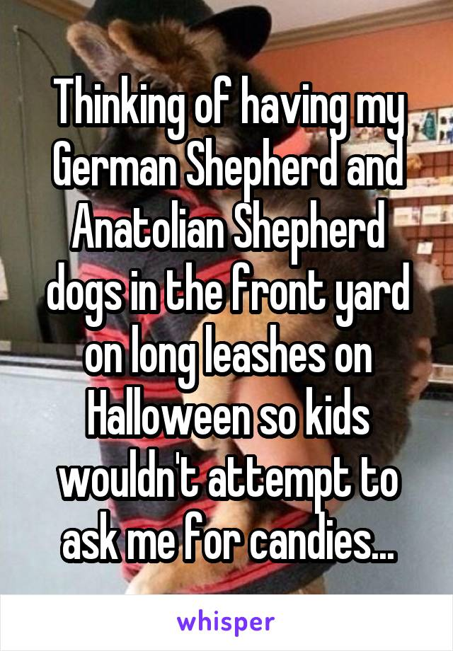 Thinking of having my German Shepherd and Anatolian Shepherd dogs in the front yard on long leashes on Halloween so kids wouldn't attempt to ask me for candies...