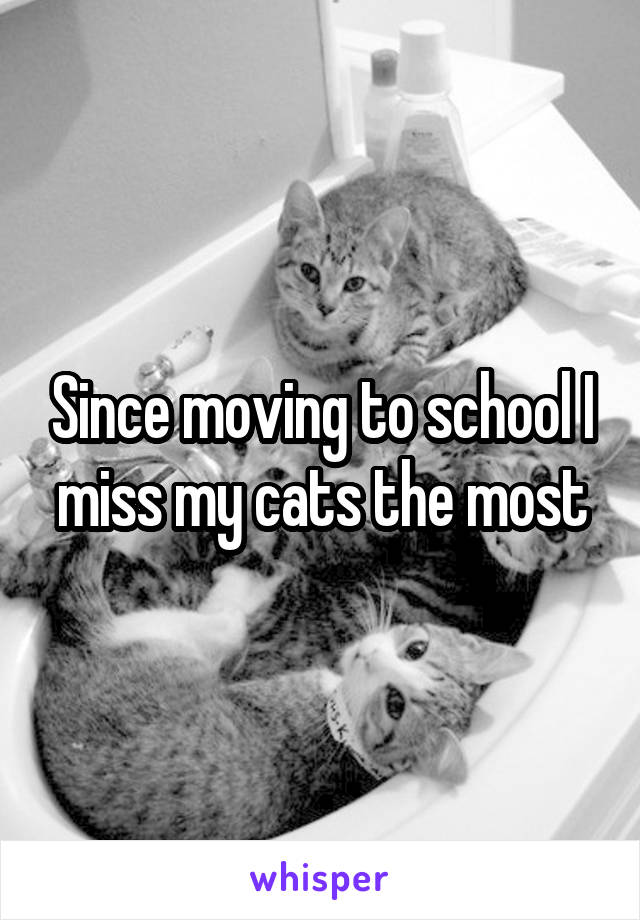 Since moving to school I miss my cats the most