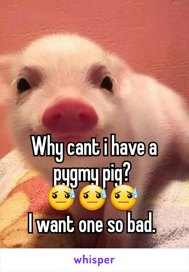 Why cant i have a pygmy pig?  😓😓😓  I want one so bad.