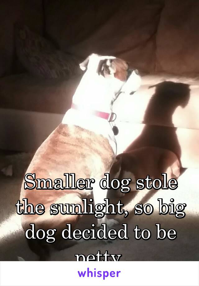 Smaller dog stole the sunlight, so big dog decided to be petty.