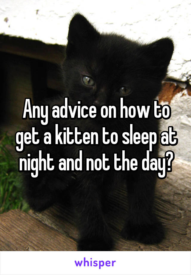Any advice on how to get a kitten to sleep at night and not the day?