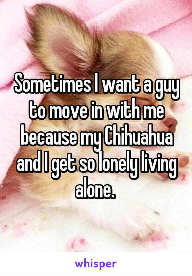 Sometimes I want a guy to move in with me because my Chihuahua and I get so lonely living alone.