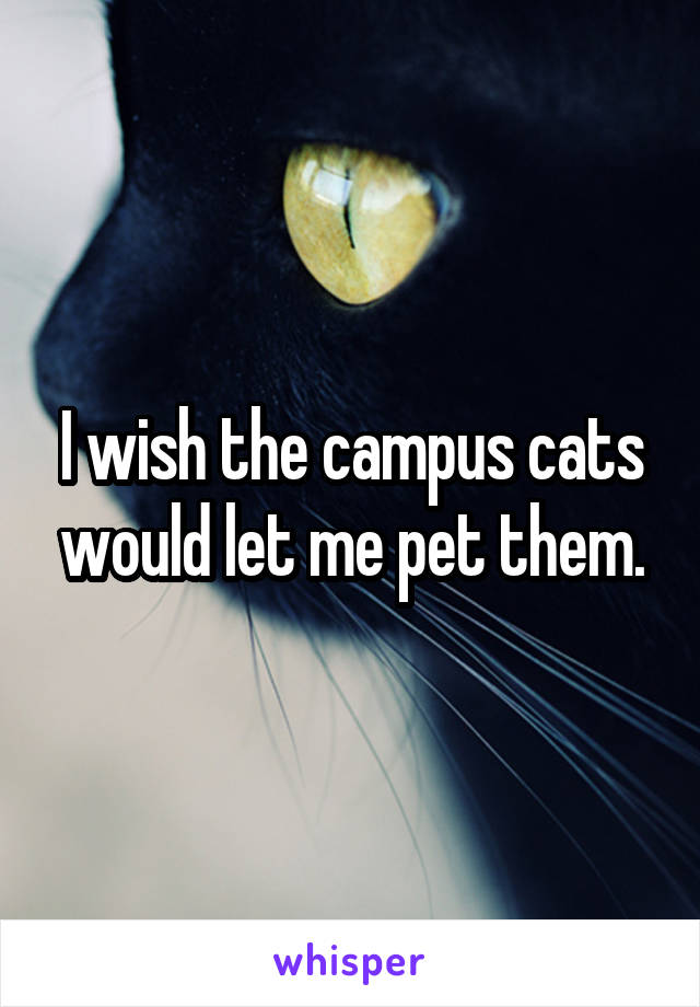 I wish the campus cats would let me pet them.