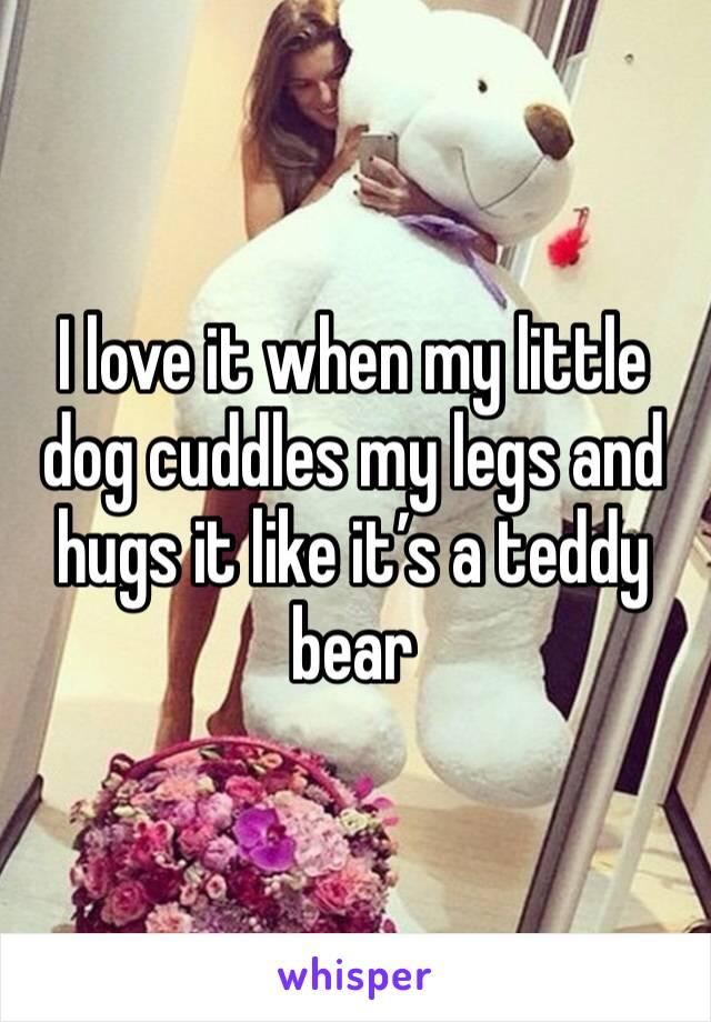 I love it when my little dog cuddles my legs and hugs it like it's a teddy bear