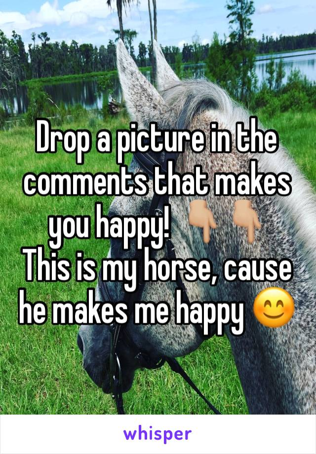 Drop a picture in the comments that makes you happy! 👇🏼👇🏼 This is my horse, cause he makes me happy 😊